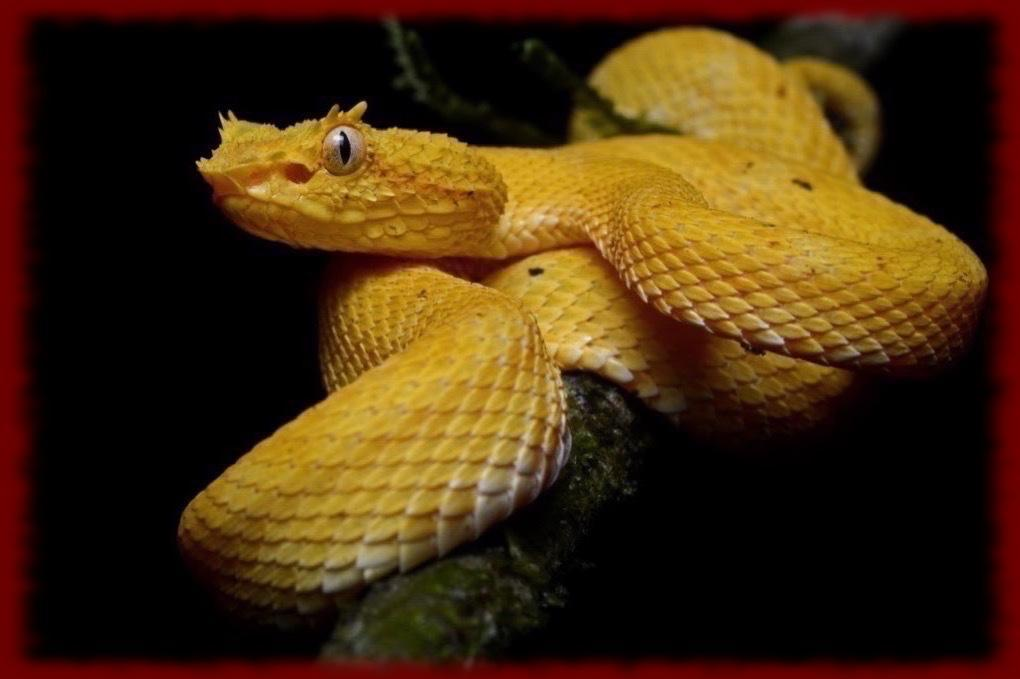 Pit Viper Wallpapers For Android Apk Download