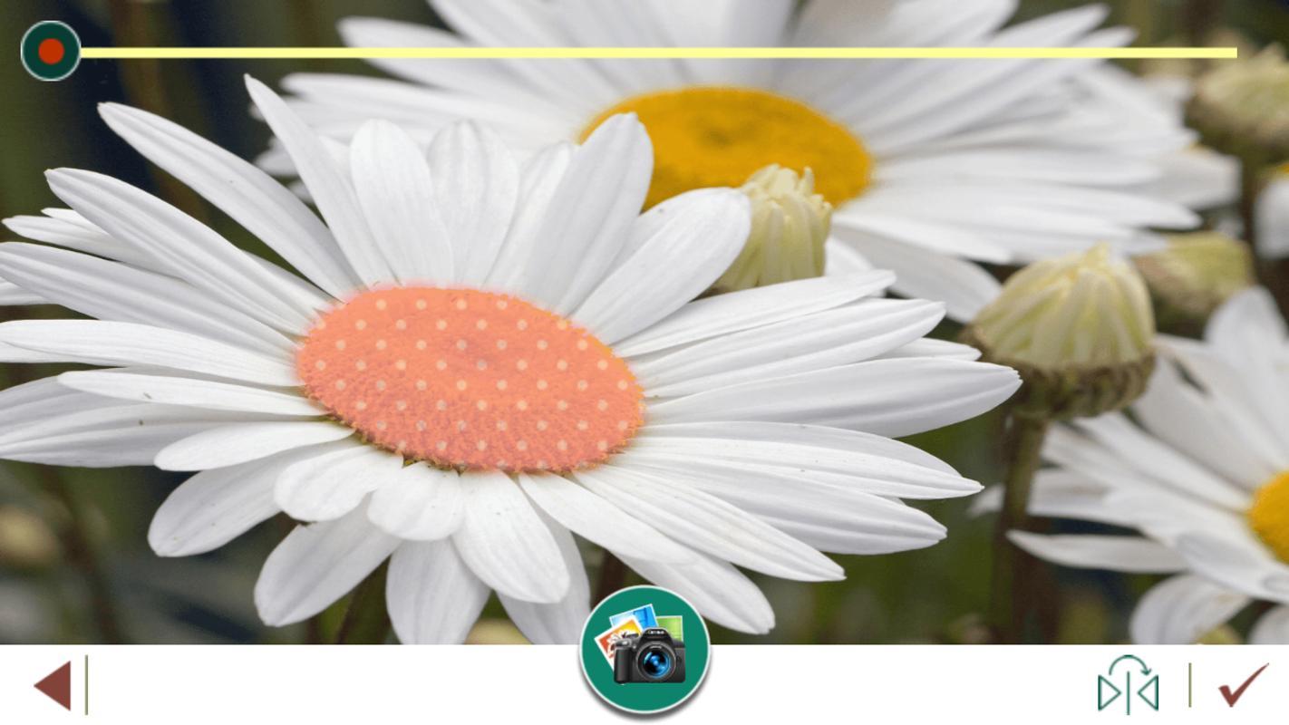 margarita flores marco fotos Descarga APK - Gratis Fotografía ...