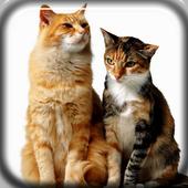 Funny Cats Live Wallpaper icon