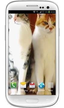 Funny Cats Live Wallpaper poster