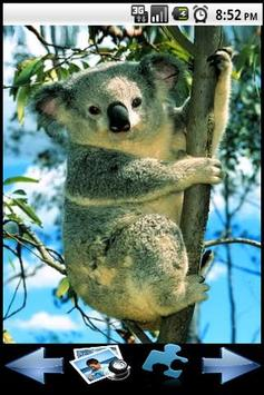 Koala Puzzle poster