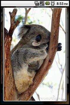 Koala Puzzle screenshot 2