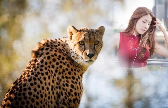 Cheetah Photo Frames screenshot 2