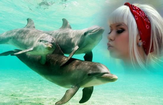 Dolphin Photo Frame poster