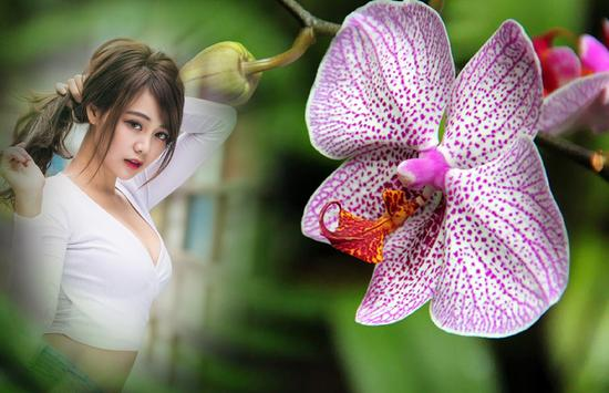 Orchid Photo Frames apk screenshot