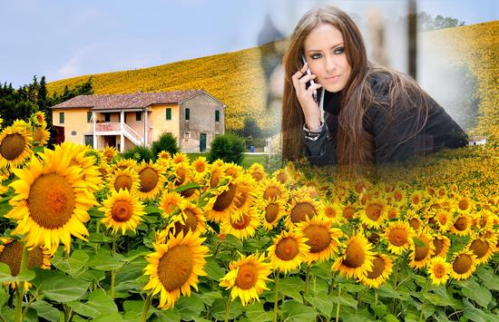 Sunflower Photo Frames apk screenshot