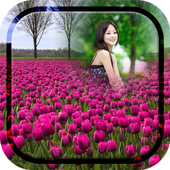 Purple Tulips Photo Frames icon