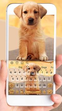 Cute Dog Labrador poster