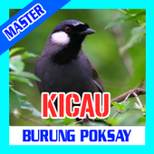 KICAU BURUNG POKSAY icon