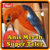 Kicau Anis Merah Super Teler icon