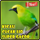 Kicau Cucak Ijo Super Gacor icon