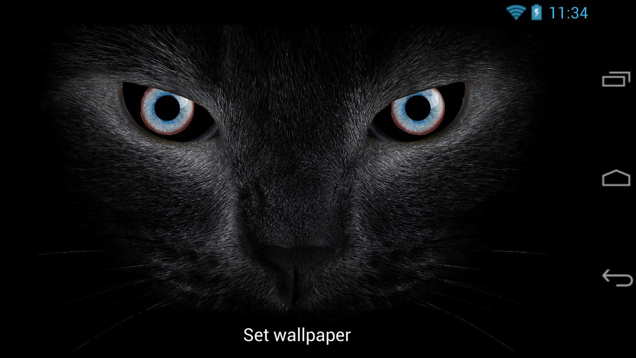 Black Cat Eyes Live Wallpaper For Android Apk Download