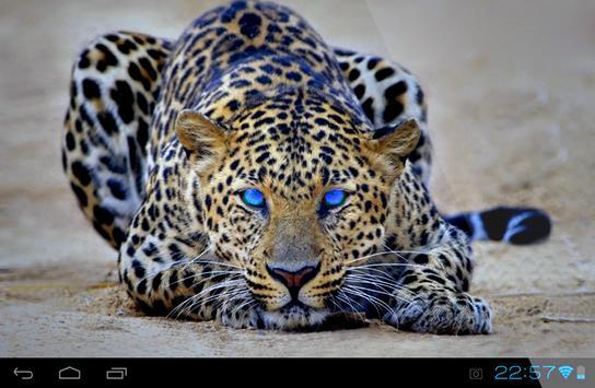 Cheetah Live Wallpaper screenshot 5