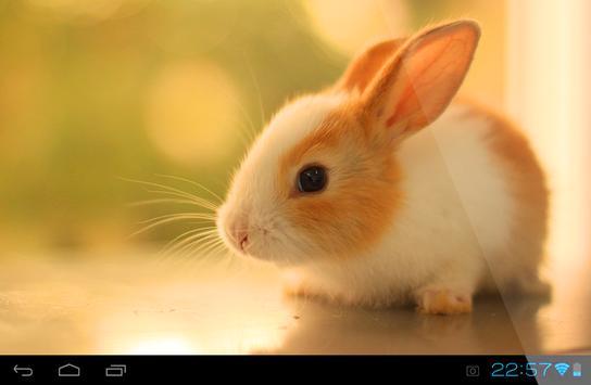 Rabbit Live Wallpaper screenshot 3