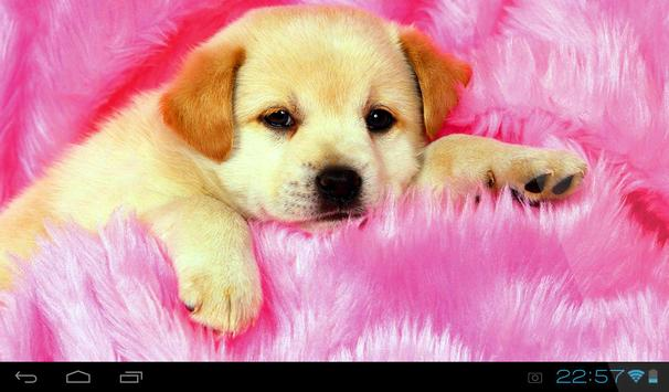 Puppies Live Wallpaper apk screenshot