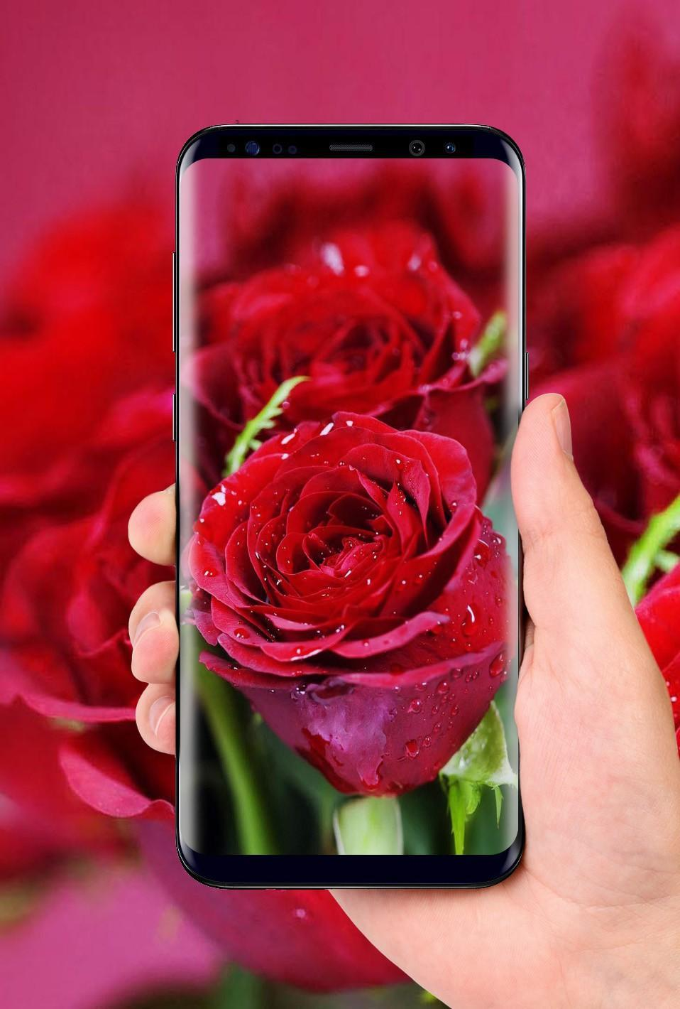 Beautiful Rose Free Live Wallpaper For Android Apk Download