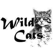 Wild Cats : 대한민국 '비'공식 취미생활 연구소 icon