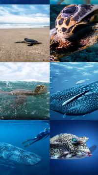 aquatic wallpapers hd for android apk download