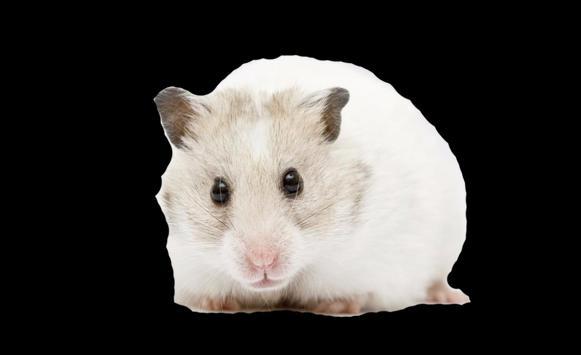 Hamsters Dislikes Children apk screenshot