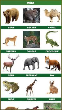 Animal and Birds Multilanguage screenshot 14