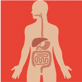 Basic of Digestive System icon