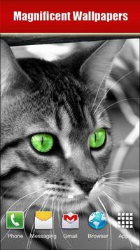 Cats screenshot 2