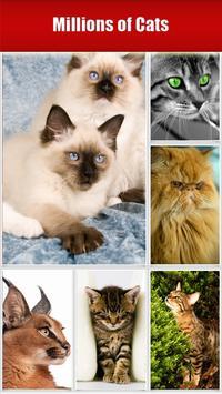 Cats screenshot 5