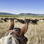 Cattle Drives Wallpapers icon