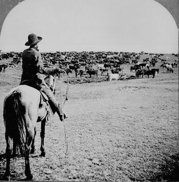 Cattle Drives Wallpapers screenshot 1