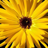 Cool Flowers Wallpapers (Free) icon