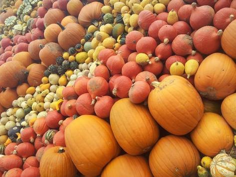 Pumpkin Farms Wallpapers poster