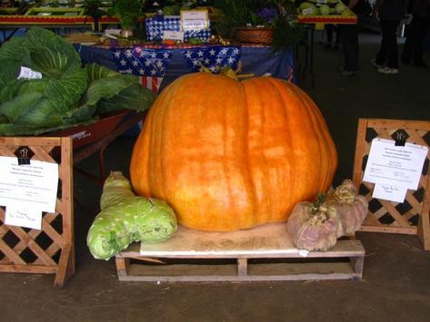 Pumpkin Farms Wallpapers screenshot 1