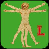 Proportion calculator LITE icon