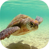 TURTLE Wallpapers v1 icon