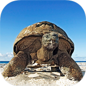 TURTLE Wallpapers v2 icon