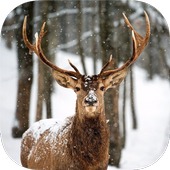 DEER Wallpapers v1 icon