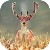 DEER Wallpapers v2 icon