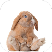 RABBIT Wallpapers v4 icon