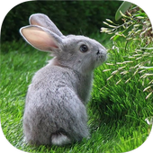 RABBIT Wallpapers v3 icon