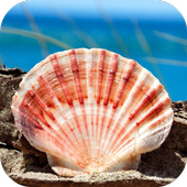 SHELL Wallpapers v1 icon