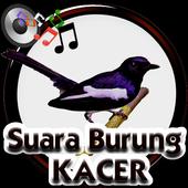 Suara Burung Kacer icon