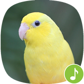 Appp.io - Parrotlet Sounds icon