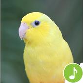 Appp.io - Parrotlet Sounds icon