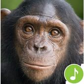 Appp.io - Chimpanzee sounds icon