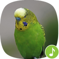 Appp.io - Parakeet Sounds