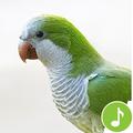Appp.io - Parrot sounds!