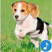 Appp.io - Puppy Sounds icon