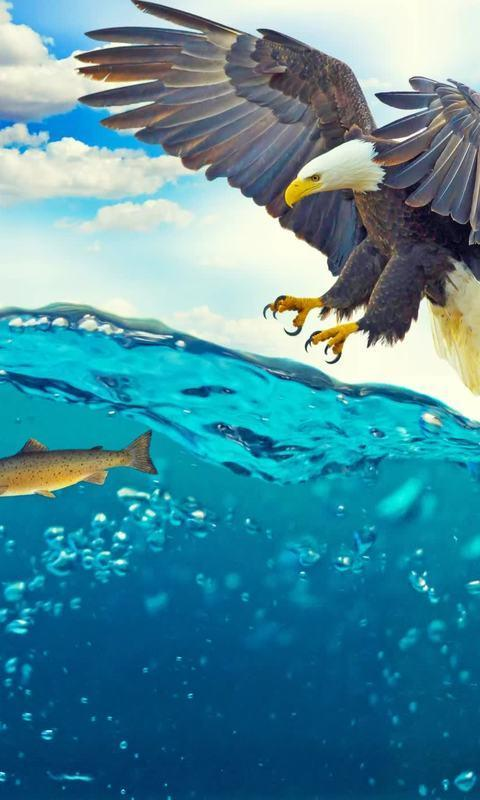 Eagle Live Wallpaper Animal Ocean Poster