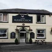 Gamecock Bury icon