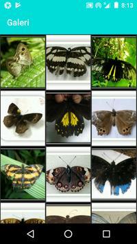تصنيف الفراشة - تعرف على الفراشات تصوير الشاشة 3